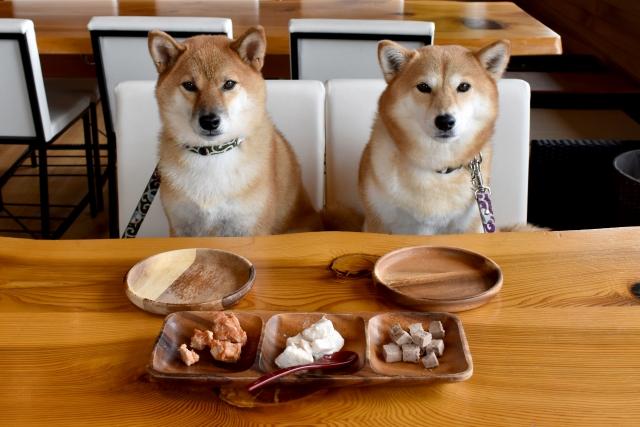 犬や猫の食事に嫉妬し脳みそが働きだした!